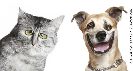 Pets caricature